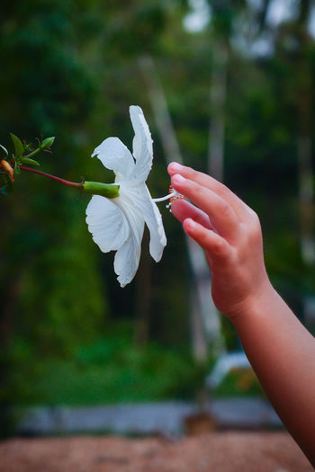 Hand and flower ASIA Perak Taiping Beauty In Nature Close-up Day Flower Flower Head Focus On Foreground Fragility Freshness Holding Human Body Part Human Hand Lifestyles Malaysia Nature One Person Outdoors People Petal Plant Real People