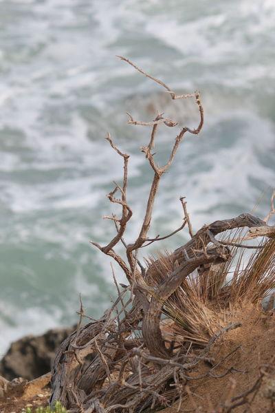 Cliff Top View Southend South Australia Beach Grass🌱 Driftwood