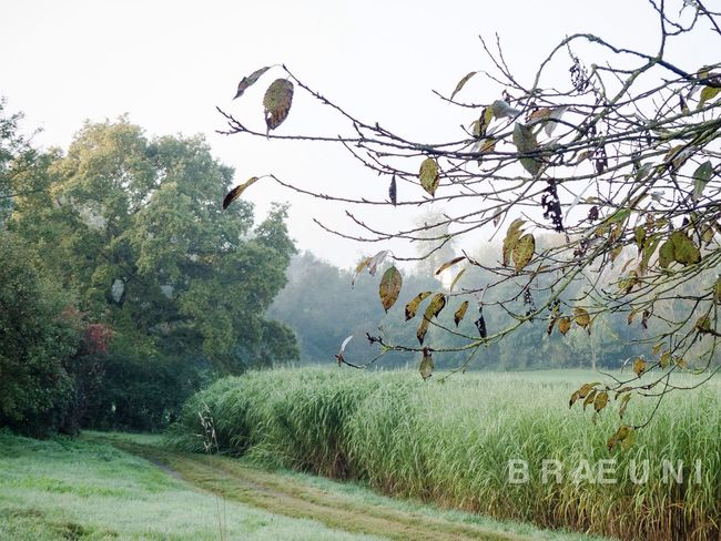 Morningwalk Nature Morning