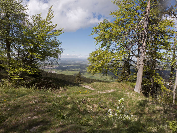 Albsteig Hiking View Beauty In Nature Cloud - Sky Environment Forest Grass Growth Hiking Trail Landscape Mountain Non-urban Scene Outdoors Plant Scenics - Nature Schwäbische Alb Sky Tranquil Scene Tranquility Tree