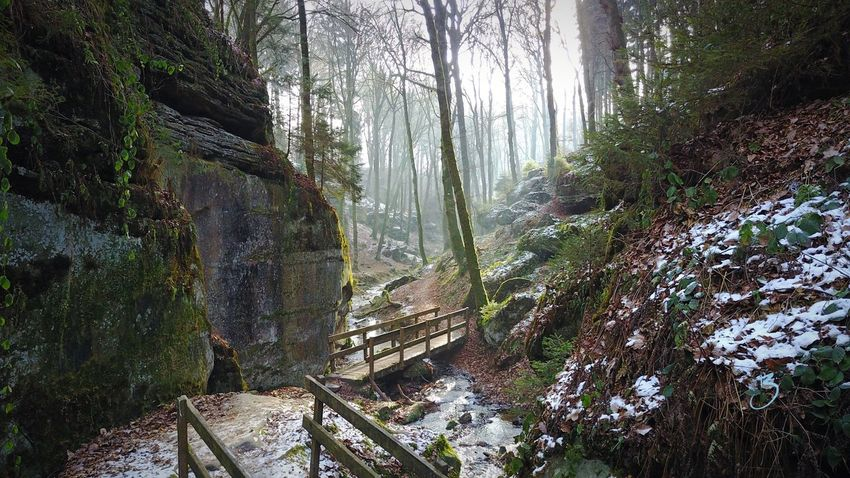 Forest Nature Beauty In Nature Tree Scenics Landscape Fog Social Issues Environment Tranquility Tree Trunk Hiking Non-urban Scene Rural Scene Idyllic Outdoor Pursuit Freshness No People Outdoors Waterfall Müllertal,Luxemburg Müllerthal Mullerthal Trail Beaufort  Luxembourg
