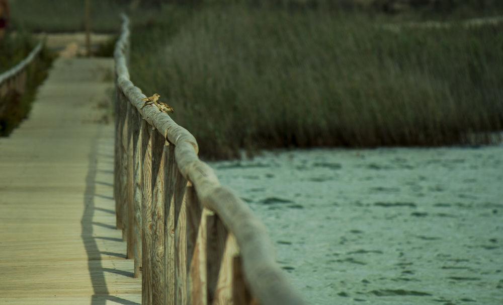 Aves Birds Murcia Provincia Murciagramers Salinas De San Pedro Del Pinatar San Pedro Del Pinatar