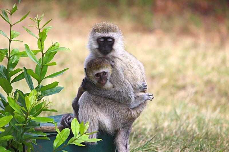 Monkeys Monkey