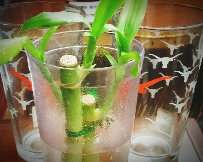 Bamboo strength Wordless Strength Strength Powerful Lasting Life