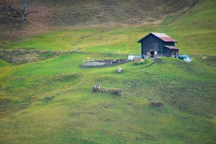Agriculture Architecture Barn Beauty In Nature Building Exterior Built Structure Day Domestic Animals Farmhouse Field Grass House House In Mountain Hut Landscape Livestock Mammal Mountain Nature No People Outdoors Rural Scene