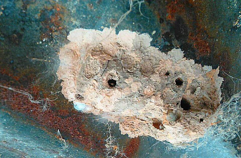 Wasps Nest Wasp Nest Photography #photo #photos #pic #pics #tagsforlikes #picture #pictures #snapshot #art #beautiful #instagood #picoftheday #photooftheday #color #all_shots #exposure Composition Focus Capture Moment [ [ Route 66 Mojave Old West  Nature_collection Hornet Photography #photo #photos #pic #pics Tagsforlikes Picture Pictures Snapshot Art Beautiful Instagood Picoftheday Photooftheday Color All_shots Exposure Composition Focus Capture Moment [ [a: [a: [a:44 Photography #photo #photos #pic #pics #tagsforlikes #picture #pictures #snapshot #art #beautiful #instagood Pic Oftheday Photooftheday Color All_shots Exposure Composition Focus Capture Moment [a: [a: [ [a:16 [ [[a:121 0 [a:12 Gettyimages [a:phot Ography Photo Photos Pic Pics Tagsforlikes Picture Pictures Snapshot Art Beautiful Instagood Picofth Eday Photooftheday Color All_shots Exposure Composition Focus Capture Moment [ [a: [a:1522 [ [ [a:photograph [ [a:56 [ [a: [ [a:photography Photo Photos Pic Pics Tagsforlikes Picture Pictures Snapshot A Rt Beautiful Instagood Picoft Heday Photooftheday Color All_shots Exposure Composition Focus Capture Moment [a: [ [ [a: [ [ Photography #photo #photos #pic #pics #tagsforlikes #picture #pictures #snapshot #art #beautiful Instagood Picoftheday Photooftheday Color All_shots Exposure Composition Focus Capture Moment [a:159927 Photography Photo Photos Pic Pics Tagsforlikes Picture Pictures Snapshot Art Beautiful Instagood Picoftheday Photooftheday Color All_shots Exposure Composition Focus Capture Moment [ [a: [a: [a:44 [ Eyeontheworld Photography #photo #photos #pic #pics Tagsforlikes Picture Pictures Snapshot Art Beautiful Instagood Picoftheday Photooftheday Color All_shots Exposure Composition Focus Capture Moment [a: [ [a:4454 Photography #photo #phot Os #pic #pics #tagsfo Rlikes #picture #pictures #snapshot Art Beautiful Instagood Picoftheday Photooftheday Color All_shots Exposure Composition Focus Capture Moment [a: [ [a: Photography Photo Photos Pic Pics Tagsforlikes Picture Pictures Snapshot Art Beautiful Instagood Picoftheday Photooftheda Y Color All_shots Exposure Composition Focus Capture Moment [ [ [ [a:12 [a: 121 0 [a:12 Gettyimages [a:phot Ography Photo Photos Pic Pics Tagsforlikes Picture Pictures Snapshot Art Beautiful Instagood Picofth Eday Photooftheday Color All_shots Exposure Composition Focus Capture Moment [ [a: [a:1522 [ [ [a:photography Photo Photos Photography #photo #photos #pic #pics #tagsforlikes #picture #pictures #snapshot #art #beautiful #instagood #picoftheday Photooftheday Color All_shots Exposure Composition Focus Capture Moment [a: [ [ Pastel Power