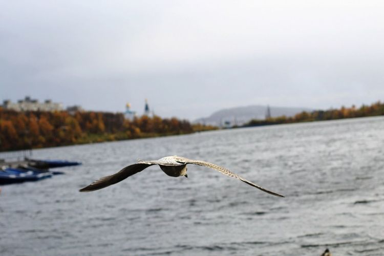 Bird Bird Of Prey Flying Water Spread Wings Animal Themes Sky Eagle - Bird