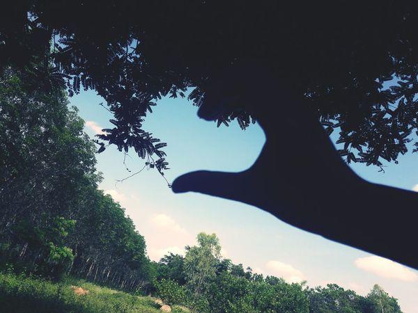 หัวจายยยยยยยย❤ Forest Nature Beauty In Nature Pinaceae Heart Leaves🌿 Sky Blue Sky  Sky EyeEm Best Shots Field One Person EyeEmNewHere Blue Sky And Clouds BaiTaEwWorld