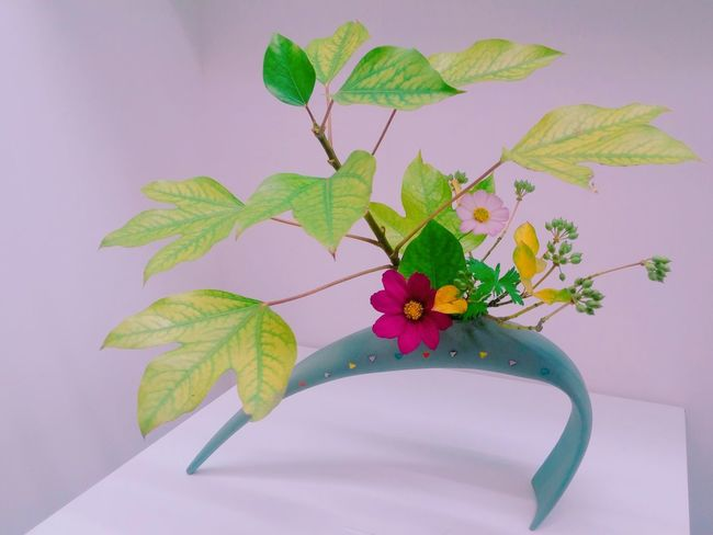 生花 IKEBANA Flower Arrangement Flower Leaf Green Color Nature Flower Head