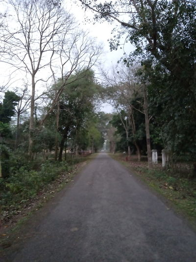 Empty road amidst trees in forest against sky