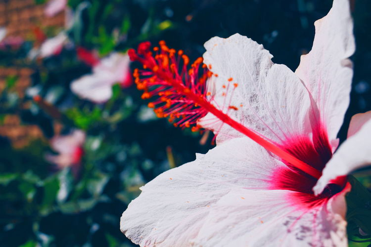 petals. Zeeromoments EyeEm Selects Flower Beauty In Nature Nature Flower Head Petal Fragility Outdoors No People Close-up Freshness Plant Day Growth