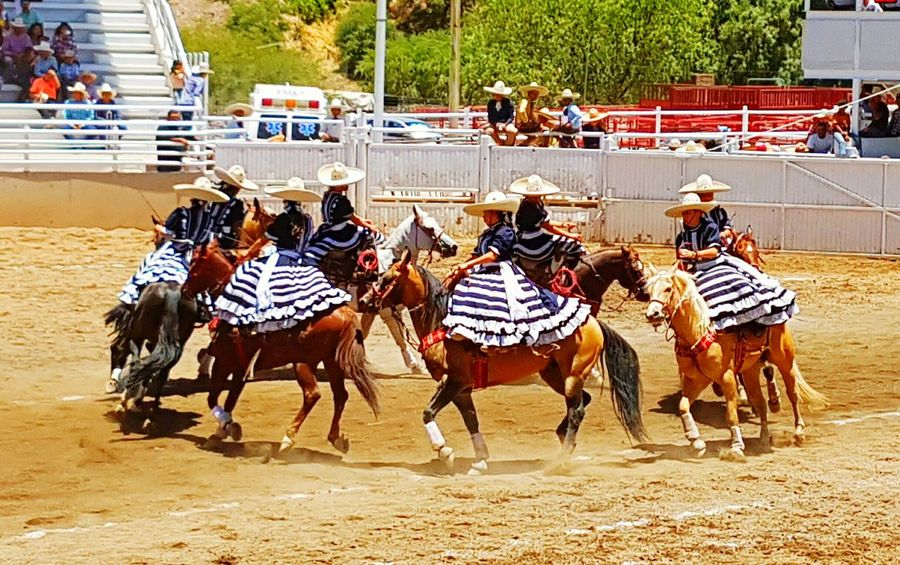 Horse Domestic Animals Horseback Riding Real People Large Group Of People Animal Themes Day FNSM17 Hollydays Fiesta Mexicana Charreria Escaramuza Ladies Young Women