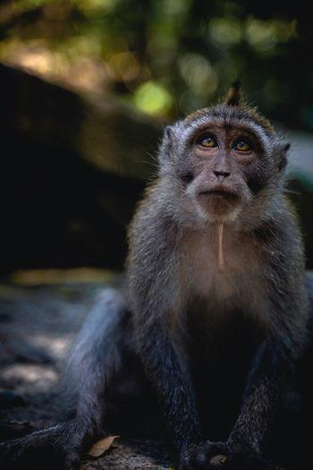 Monkey sitting on land