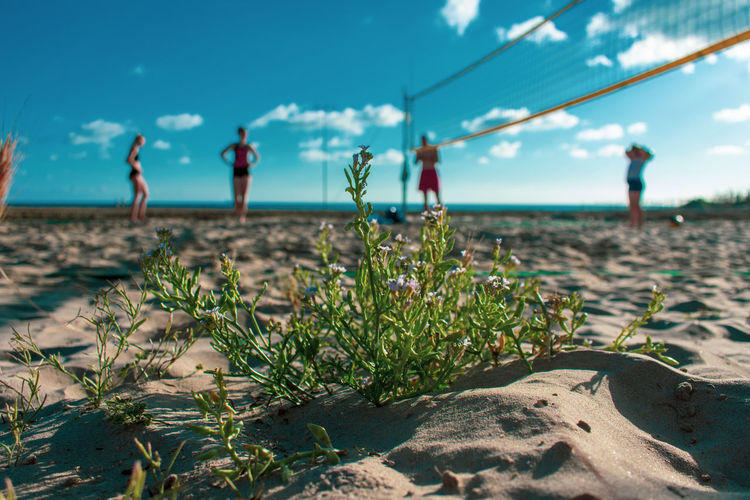 people and places Sandy Beach Clouds And Sky Flower Sea Water Beach Sand Sunlight Sky Horizon Over Water Close-up Landscape Flowering Plant Growing Blooming Idyllic Tranquility Remote Countryside Scenic View Shore Calm Botanical Garden