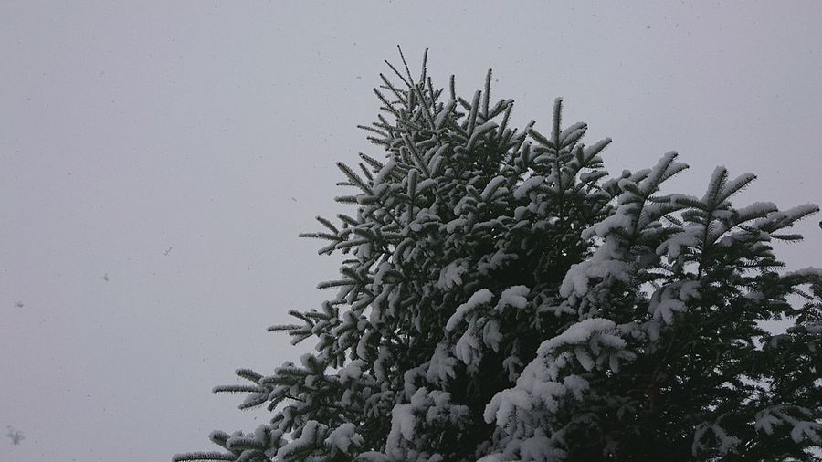 Tree Snow ❄ Low Angle View Nature Outdoors Close-up Mypointofview Winter Beauty In Nature Negative Space