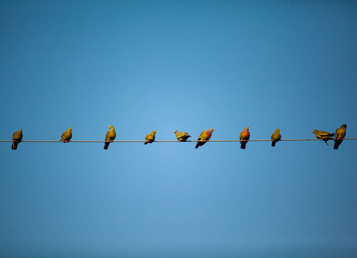 Low angle view of birds perching on cable against clear blue sky