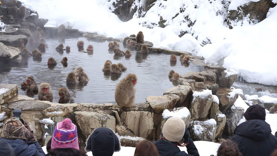 Shooting Snowmonkeys Real People Water Nature Rock - Object Day Large Group Of People Men Beauty In Nature Outdoors Cold Temperature Mammal Jigokudani-Snow-Monkey-Park Nagano Prefecture,Japan Animal Themes Monkey Japanese Macaque Hot Spring Spa Travel Destinations Shigakogen  Ski Holiday Snowboarding Non-urban Scene