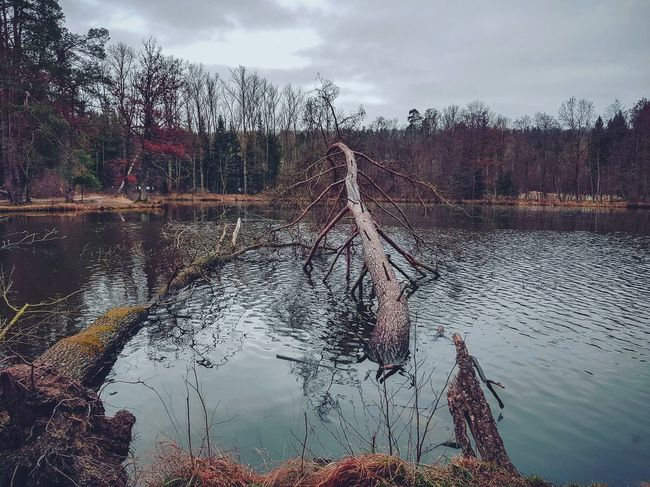 dead trees Instagood Art Outside Samsung Adult Photography Backgrounds NewEyeEmPhotographer Shades of Winter Panorama Lake See Baum Nature Cloud - Sky Sky Spraying Day No People Nature
