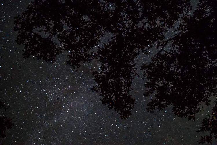 Stars over