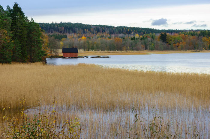 Pier Autumn Autumn Collection Autumn Colors Decay Pier Beauty In Nature Day Decaying Building Forest Grass Growth Lake Landscape Nature No People Outdoors Scenics Sky Tranquil Scene Tranquility Tree Water