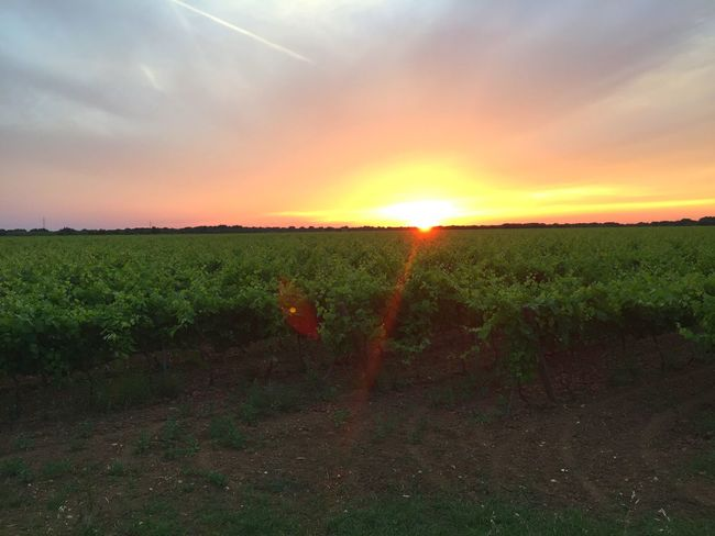 Beautiful Day Landscape Sky Nature Salento Sunset Beautiful Nature Vineyard