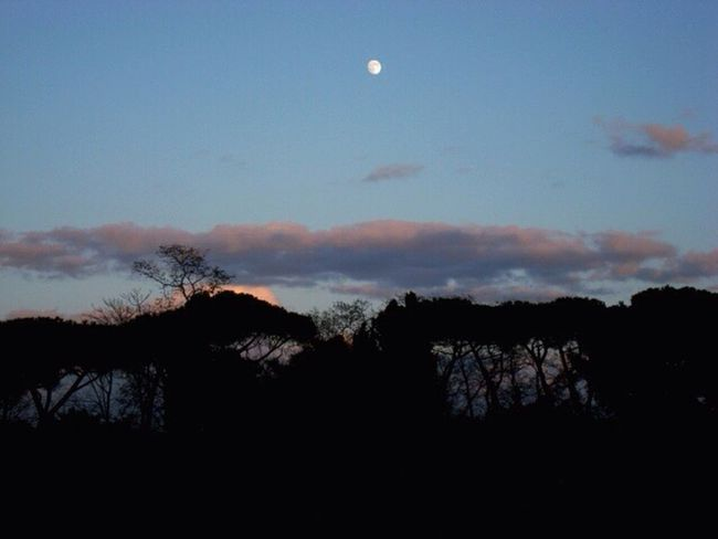 Backlight Moonlight Beautiful Nature Perfectlight Night Photography Profiles DreamChaser