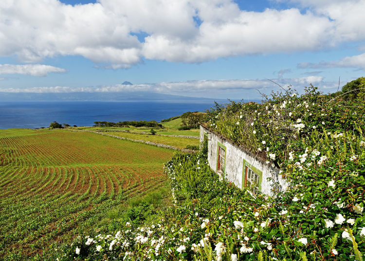 Plants growing on field by sea against sky