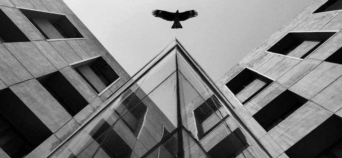 Low angle view of eagle by building against sky
