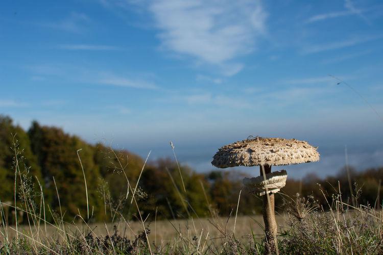 Close-up of mushroom growing on field against sky