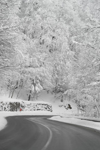Snow covered road by trees