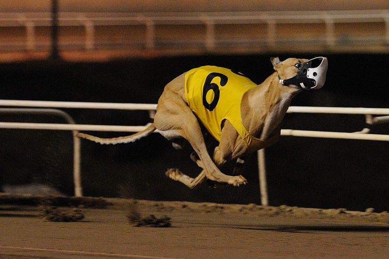 Close-up of dog running