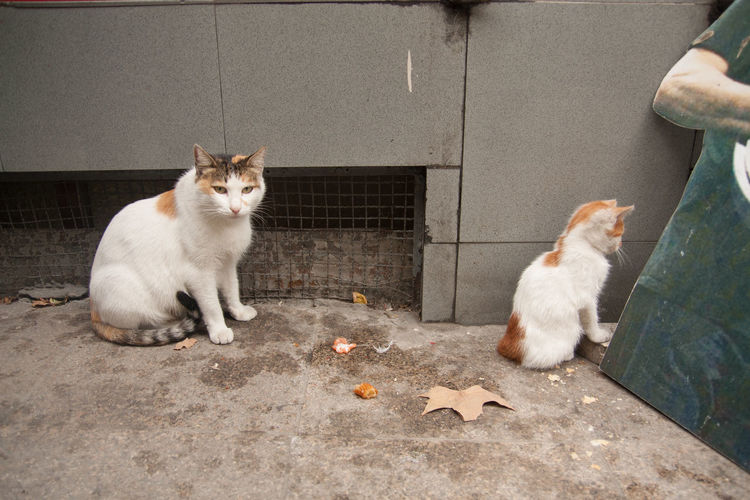 Cat And Kitten On Footpath