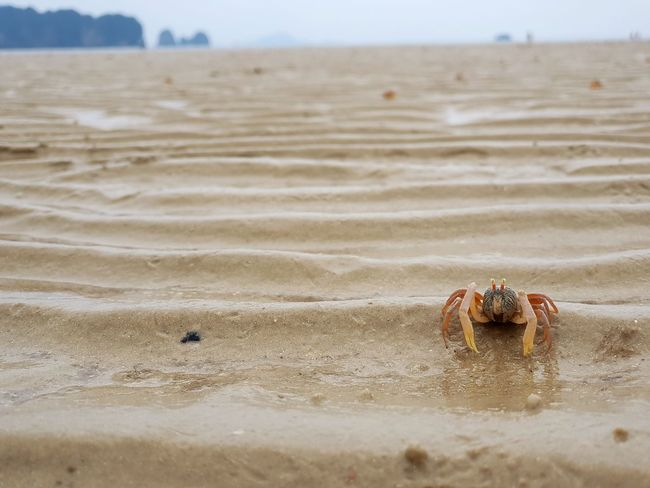 Crab Beach Sand Crab On The Beach Ghostcrab Krabi Krabi Thailand Thailand Animal Seascape Sea And Sky Sea Nature Outdoors Sea Life EyeEmNewHere Be. Ready. Crafted Beauty AI Now EyeEm Ready   Shades Of Winter The Great Outdoors - 2018 EyeEm Awards