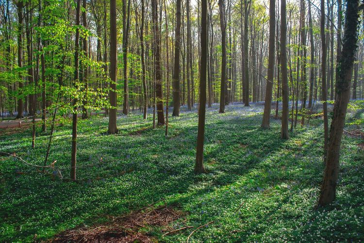 Hallerbos Belgium Nature Photography Canonphotography Hallerbos Canon Belgium Beautiful Nature Colours