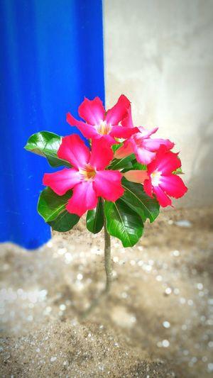 Beauty In Nature Freshness Flower Nature