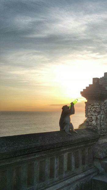 Sunset Temple Bali Monkey Drinking Galaxys6