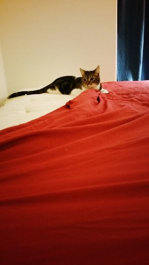 Showcase: December Helping Making The Bed Trinket Those Eyes Cat CatAttack