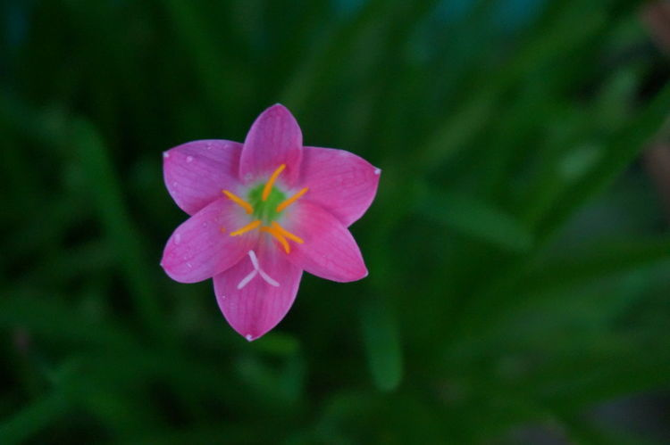 Colors And Patterns Flower Flower Collection GREEN BACKROUND Nature Nature Photography Outdoors Pink