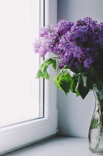 Close-up of flowers on window sill at home