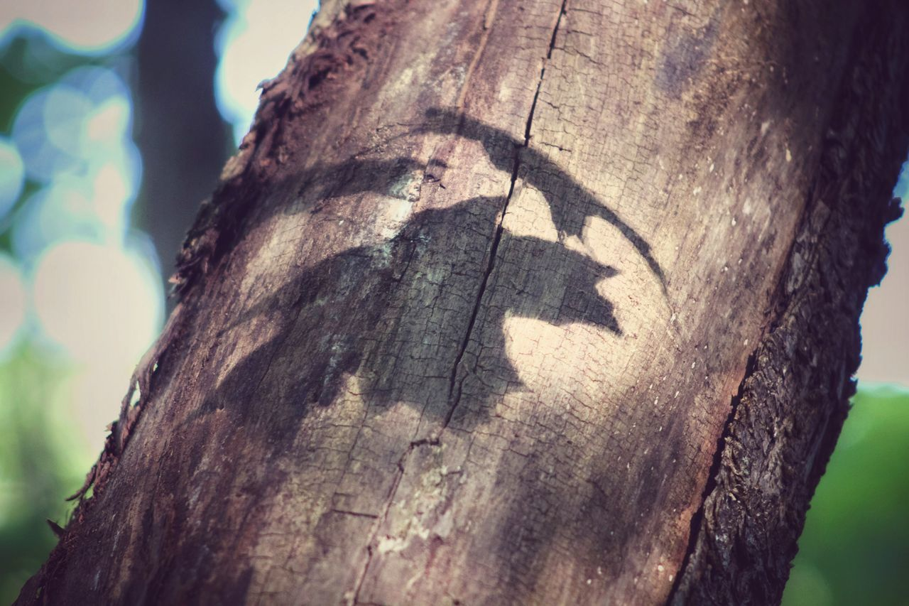 tree trunk, tree, textured, wood - material, rough, close-up, day, outdoors, bark, no people, focus on foreground, sunlight, nature, tree stump, animal themes, sky