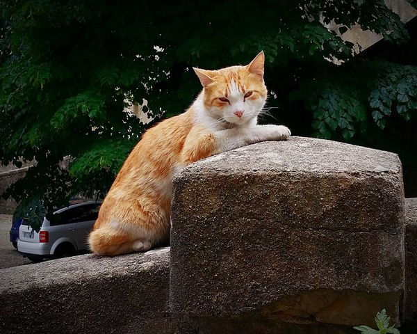 Pets Corner Cat Gatto Walking Around Nature_collection EyeEm Gallery EyeEm Best Edits Mressenzialmenteluca First Eyeem Photo EyeEm Best Shots