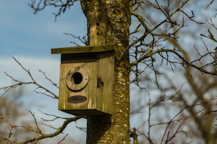 Birdhouse Tree Focus On Foreground No People Bare Tree Branch Outdoors Wood - Material Tree Trunk Architecture Bird Trunk Germany Winter