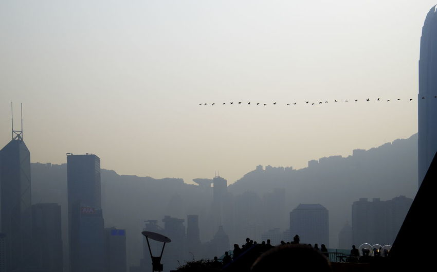 Silhouette birds flying over city against clear sky