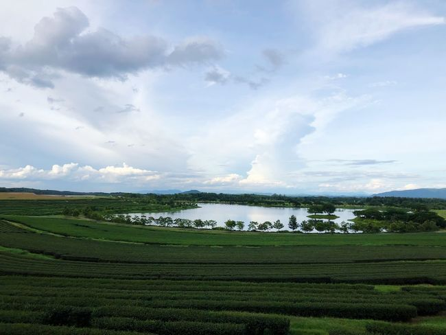 Cloud - Sky Beauty In Nature Landscape Sky Scenics - Nature Environment Tranquility Plant Tranquil Scene Land Green Color Rural Scene Nature Farm Agriculture Growth Day Water Field
