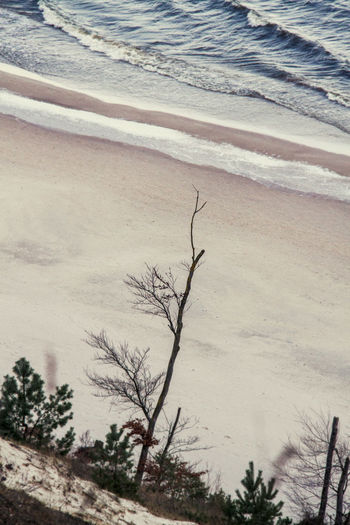 Beach Beauty In Nature From Above  Full Frame Outdoors Pastel Colors Sand Sea Tranquil Scene Trees Wave WAVE'