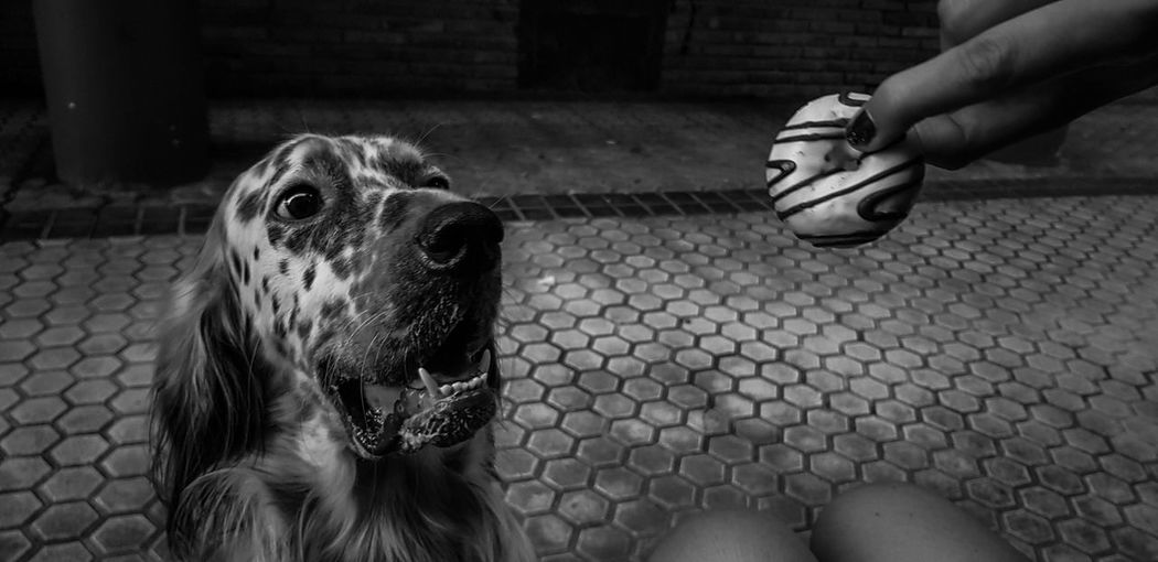 Donette!! Dogs Of EyeEm Pets Pensamientos Setter Inglese Dog Love Perro Detalles Amigo Obsevacion Miradas Pensar Maldad Donettes Rayados Real People Paseo Scared Face Sueños Siestas Y Todo Lo Que Empieze Por S Ojazos Vivo FIN Human Hand Close-up EyeEmNewHere