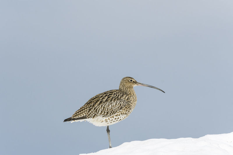 Low angle view of bird perching on snow against sky