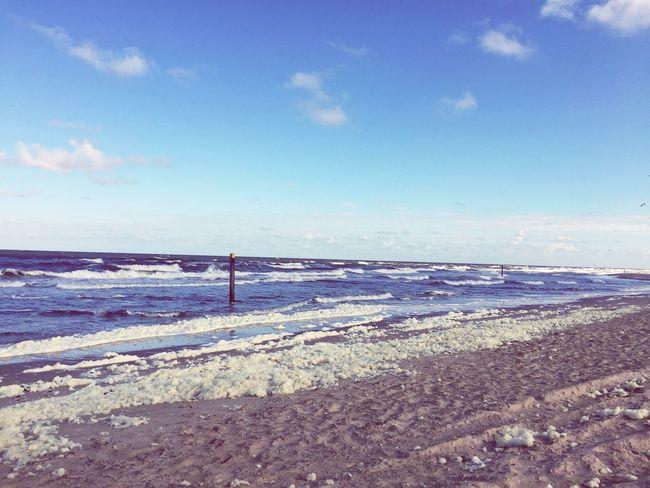 Invasive Species Wadden Sea Texel