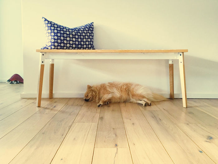 Pet Portraits Animal Themes Day Dog Domestic Animals Domestic Cat Home Interior Indoors  Lying Down Mammal No People One Animal Pets Relaxation