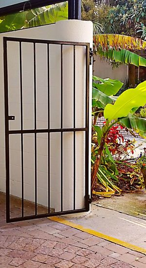 Entrance Entrance Gate Gate Go Inside Metal Gate Entranceway Large Leaves Banana Leaf